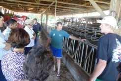 Família Steffens produz diariamente 900 litros de leite. A produção anual chega a 330 mil litros