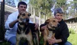 Cães foram encontrados em frente ao canil na manhã de domingo por um funcionário. A pessoa que abandonar animais, pode ser punida criminalmente com pena de três a seis meses de detenção