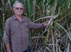 Na propriedade, Hilário cultiva diversas variedades de cana-de-açúcar