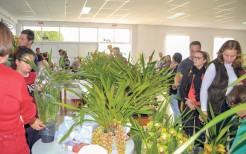 Feira organizada pelos artesãos do município chega a sua quinta edição