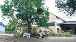 Parte da árvore caiu na noite de sábado para domingo, causando comoção na comunidade