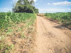 Além do prejuízo na lavoura, produtores de grãos reclamam da falta de educação de alguns gaioleiros
